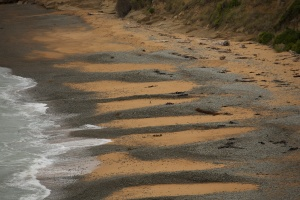 The yellow-eyed penguin landing beach