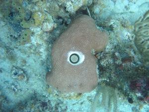 Coral core in progress