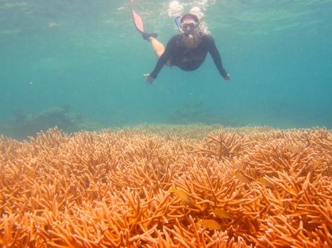 An impressive field of endangered Acropora cervicornis coral