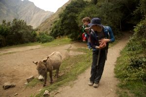 Checking out a donkey on the Inca Trail