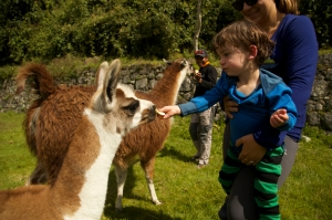 Joey feeds a baby llama