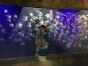 Quick visit to the aquarium