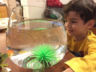 Joey's new pet fish, Dory