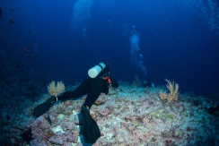 Lauren poised on the edge of a dropoff, waiting for hammerheads.